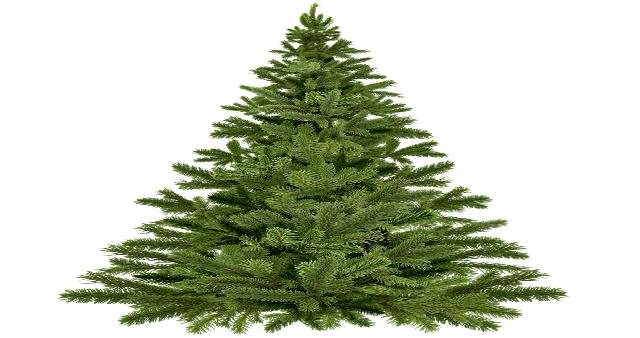 """""""L'albero della ripresa"""" di Area Pro 2020: 12 e 19 dic 2020. Appendi all'albero un oggetto o un messaggio."""